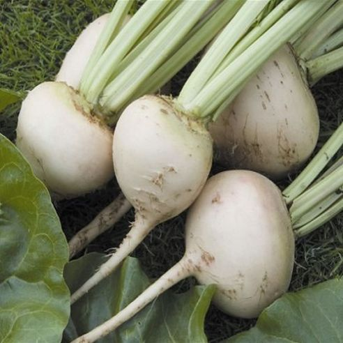 Beetroot White Detroit - Appx 40 seeds